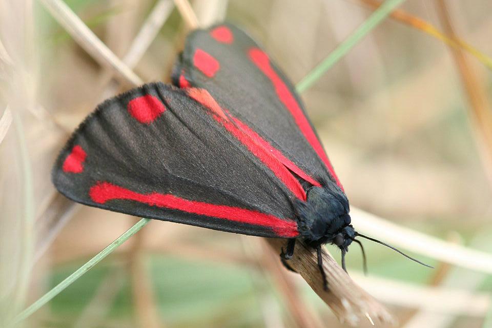 jacobusvlinder